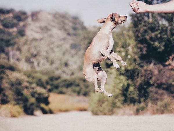 Dog training software
