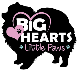 Big Hearts Little Paws